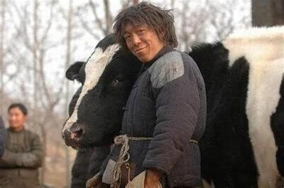 云南省昆明市西山区肉牛 800-1000斤 统货