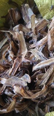 这是一张关于野生蚯蚓 的产品图片