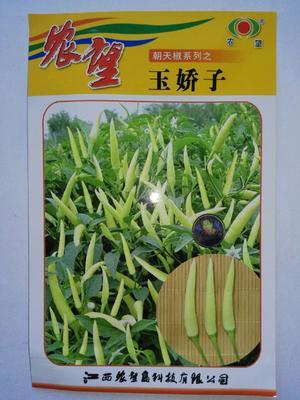 江苏省宿迁市沭阳县玉娇子 杂交种 ≥85%