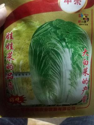 这是一张关于黄心大白菜 3~6斤 净菜 的产品图片