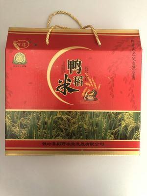 辽宁省铁岭市铁岭县长粒香大米 一等品 晚稻 粳米