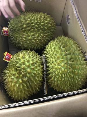广西壮族自治区崇左市凭祥市越南金枕榴莲  2 - 3公斤 90%以上 1件起大部分地区包邮