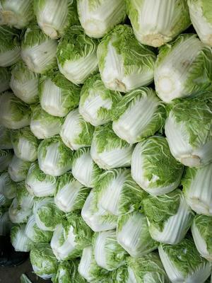 这是一张关于东京868 3~6斤 净菜 的产品图片