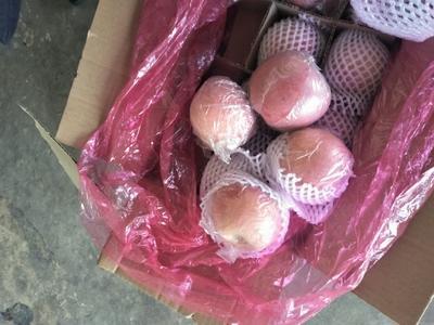 山西省运城市临猗县红富士苹果 75mm以上 片红 纸+膜袋