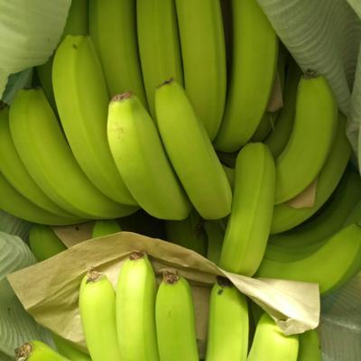 这是一张关于巴西香蕉 八成熟 的产品图片