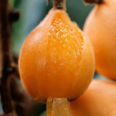 山东省临沂市平邑县晚五星  量大不剪枝带果发货。