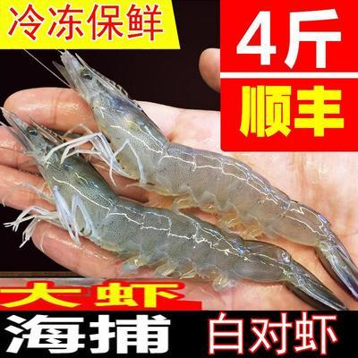 福建省漳州市龙文区中国对虾 野生 2-4钱