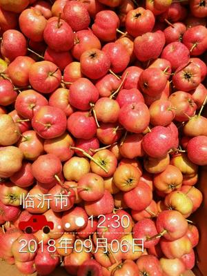 山东省临沂市平邑县青条红子 75克以上