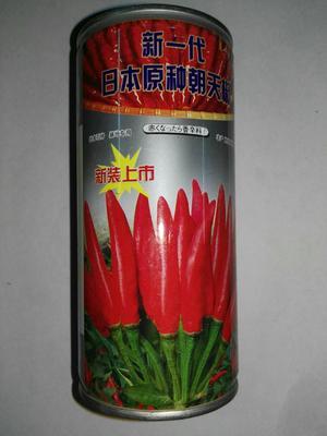 这是一张关于朝天椒种子  常规种(原种) ≥85% 150克的产品图片