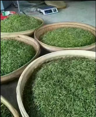 江西省吉安市遂川县狗牯脑茶 一级 袋装