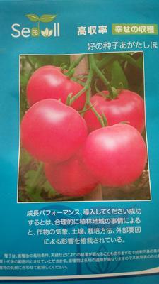 河南省商丘市睢阳区精品夏宝番茄 ≥98% 杂交种 ≥90%