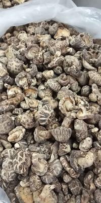 湖北省十堰市房县花菇 干香菇 2.5cm~4cm 秋菇