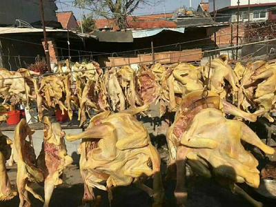 山东省青岛市城阳区笨鸡  2斤以下 公 风干鸡