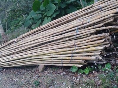 这是一张关于排山竹 的产品图片