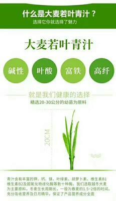 山东省临沂市平邑县酵素饮品 纸盒装 12-18个月