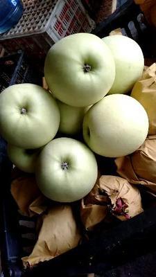 这是一张关于黄元帅苹果 75mm以下 表光 纸袋 的产品图片