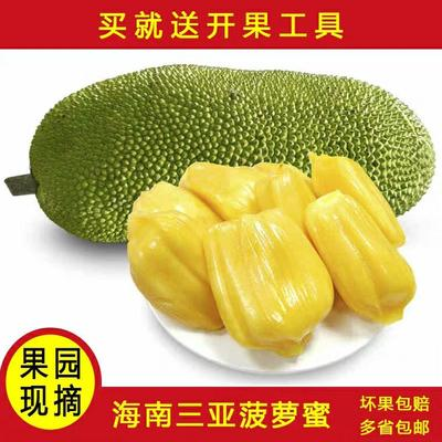 海南省海口市龙华区海南菠萝蜜 15~20斤 包邮