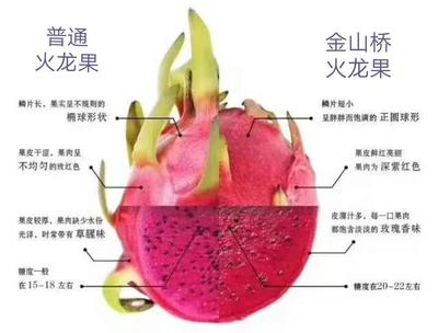 四川省成都市金堂县红皮红肉火龙果 大(7两以上)