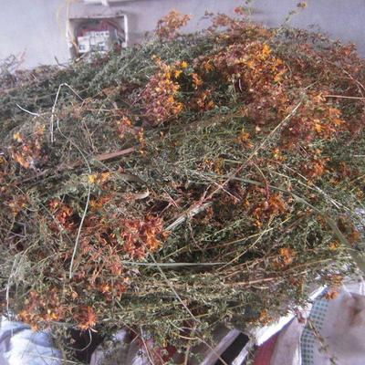 这是一张关于黄翘  贯叶连翘统货冷背药材的产品图片
