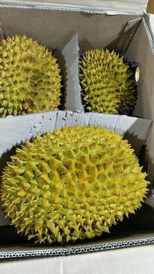 广西壮族自治区崇左市凭祥市金枕头榴莲 4 - 5公斤 80 - 90%以上
