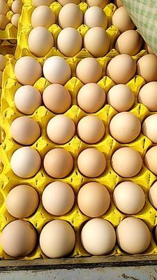 这是一张关于粉蛋 食用 箱装 的产品图片