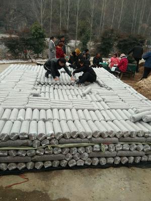 河南省南阳市内乡县香菇丁 散装 1年