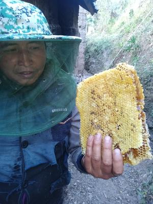 云南省普洱市景东彝族自治县土蜂蜜 玻璃瓶装 2年以上 100%