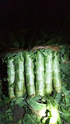 这是一张关于红叶莴笋 2斤以上 40-50cm 的产品图片