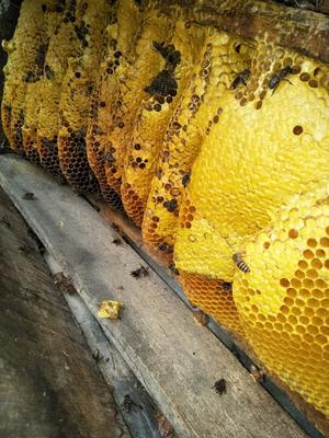 云南省红河哈尼族彝族自治州个旧市土蜂蜜 玻璃瓶装 1年 90%以上