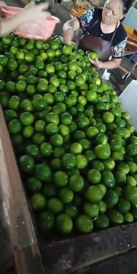 广西壮族自治区崇左市凭祥市越南青柠檬 1.6 - 2两