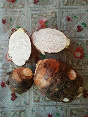 云南省红河哈尼族彝族自治州蒙自市香芋 7cm以上