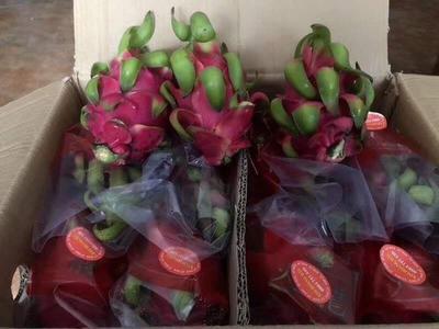 这是一张关于越南红心火龙果 中(5-7两) 的产品图片