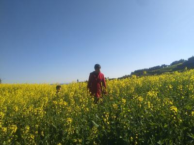 云南省昆明市五华区纯天然自炸农家特色油