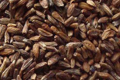 这是一张关于苍术种子 的产品图片