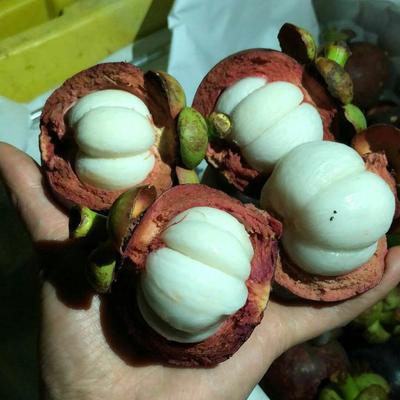 广西壮族自治区崇左市凭祥市泰国5A山竹 5斤(25-30个)