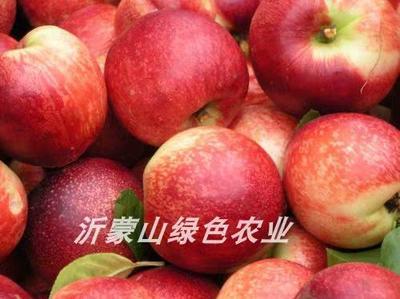 这是一张关于曙光油桃 2两以上 50mm以上 的产品图片