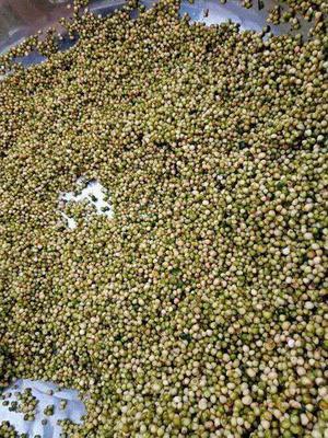 这是一张关于黄精种苗  黄精种子 黄精净子的产品图片