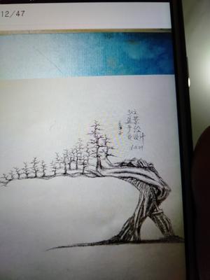 陕西省汉中市汉台区金弹子 25~30公分