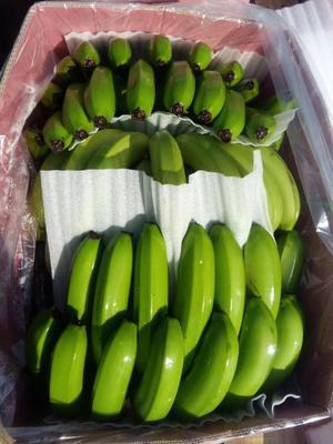 这是一张关于金平香蕉 七成熟 的产品图片