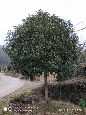 福建省南平市浦城县丹桂