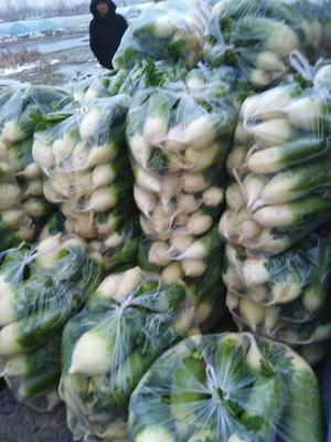 安徽省淮南市田家庵区青皮绿萝卜 1~1.5斤