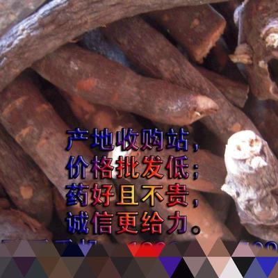 四川省广元市苍溪县中药材赤芍  川赤芍统片