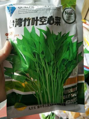 江苏省宿迁市沭阳县柳叶空心菜 15 ~ 20cm
