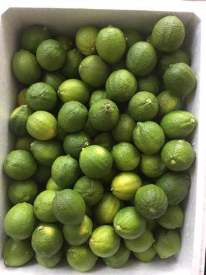 广东省惠州市博罗县台湾四季青柠檬 1.6 - 2两