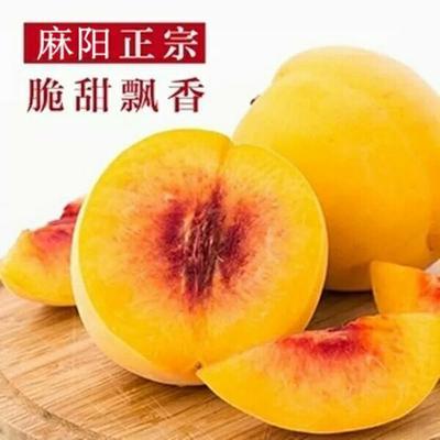 湖南省怀化市麻阳苗族自治县麻阳黄桃 甜蜜多汁自家果园
