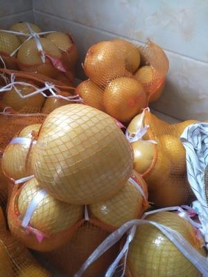广西壮族自治区桂林市全州县白皮柚  1.5斤以上 需要者可配带一个红柚