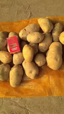 吉林省四平市公主岭市超荷兰15号土豆 2两以上