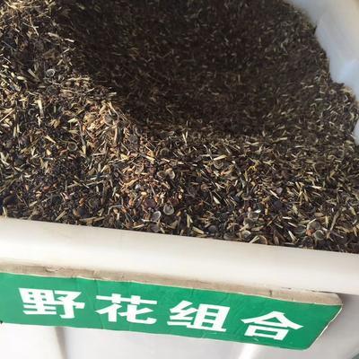 这是一张关于野花组合种子 的产品图片