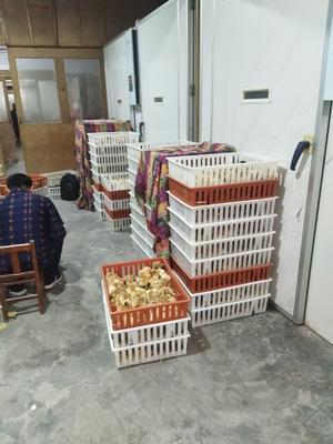 这是一张关于土鸡苗 的产品图片