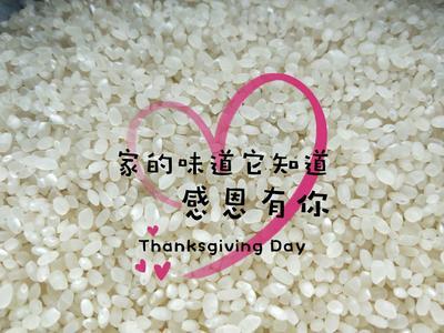 这是一张关于南粳5055大米 一等品 晚稻 粳米 的产品图片